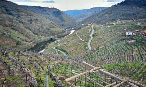 Conoce los viñedos de la viticultura heroica