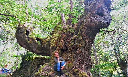 Admira los bosques de castaños milenarios
